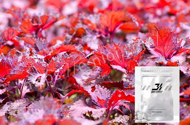 ブレスマイル紫蘇の実エキス口臭予防成分効果